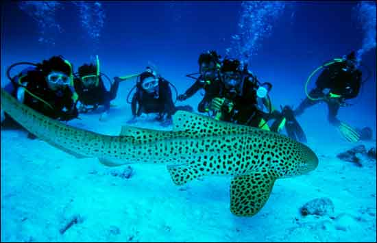 Scuba Diving - one of the most popular activities in and around Phuket