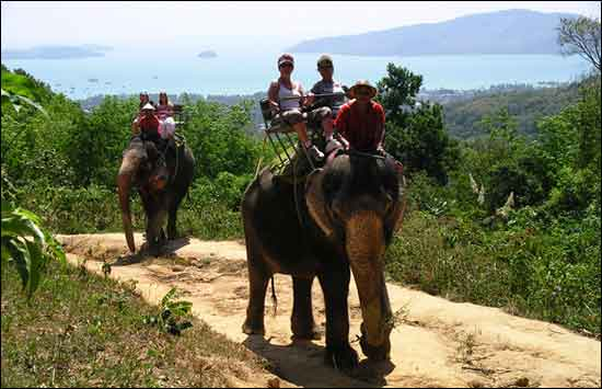 Many elephant rides in Phuket offer superb views
